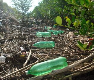 Projeto que tramita no Congresso cria possibilidade de ressarcimento para quem recupera áreas ambientais degradadas